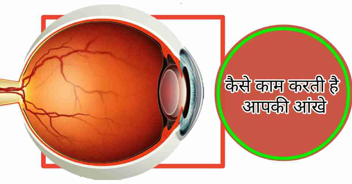 Human eye in Hindi